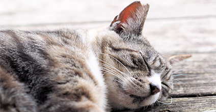 睡眠でストレスの元を解消